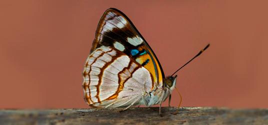 eesc exposicao fotografica insetos v2